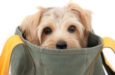 How to Raise a6-Week-Old Puppy Hassle-Free